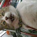 お友達猫part2