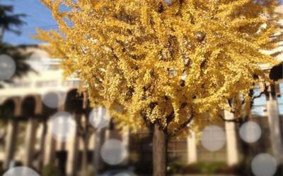 木枯らしの季節…